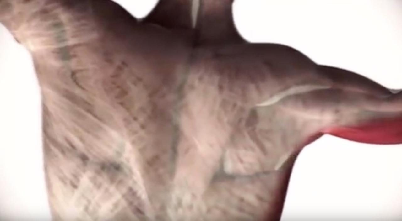 Les Facias - Ce fabuleux réseau de tissus conjonctif