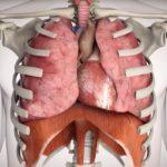Anatomie de la respiration
