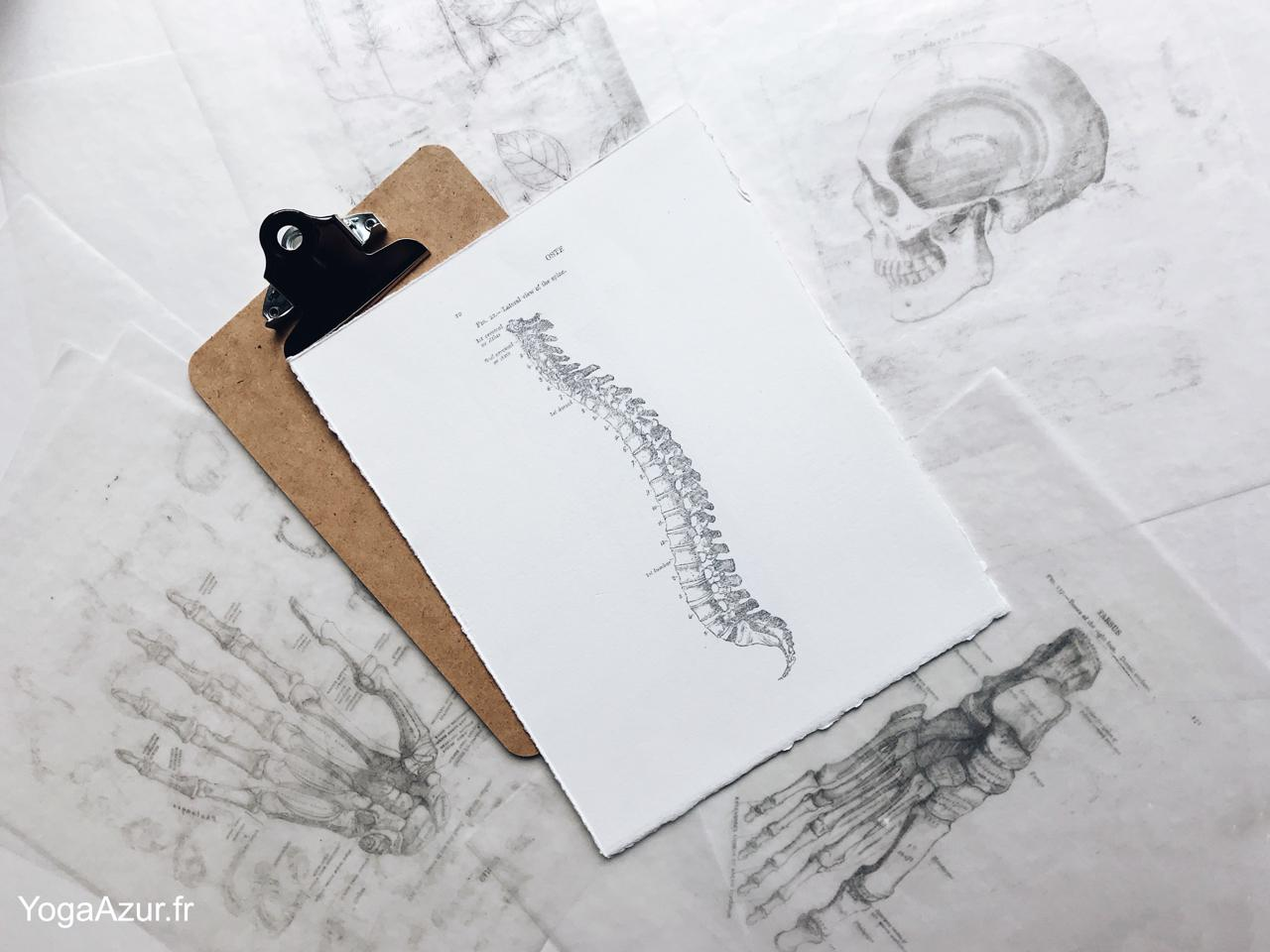 Colonne vertébrale et anatomie du mouvement