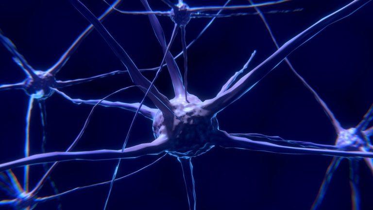 Neurones et Yoga