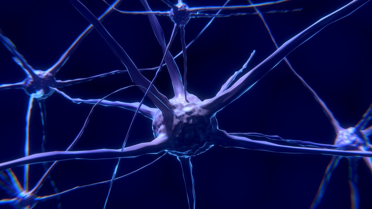 Neurones et Yoga