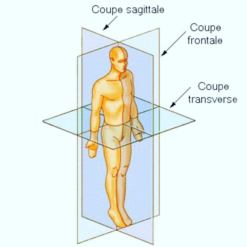 Système de Référence en Anatomie